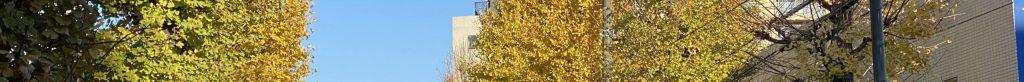 東京都中野区南台、弥生町、杉並区方南の境目の方南通の銀杏の黄葉